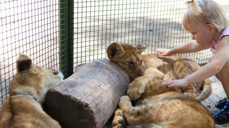 WordPressテーマ「Lion Media」で、ヘッダーを常に最上部に固定する方法