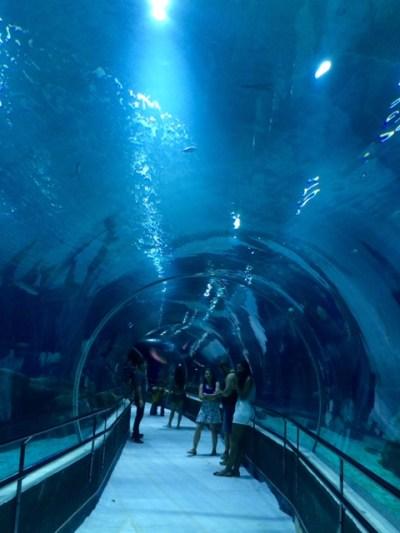 aquario_marinho_do_rio11