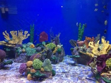 aquario_marinho_do_rio16