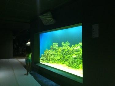 aquario_marinho_do_rio17