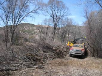 16. The biomass from all the cut and chipped material was used on the trails and spread out evenly throughout restoration area.