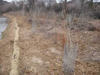 23. The SB foundation funded some additional work including the replanting of 250 cottonwoods in 2014 and the materials for fencing to protect the young cottonwoods from beaver.