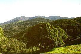 Mount Tamalpais ~ Marin County