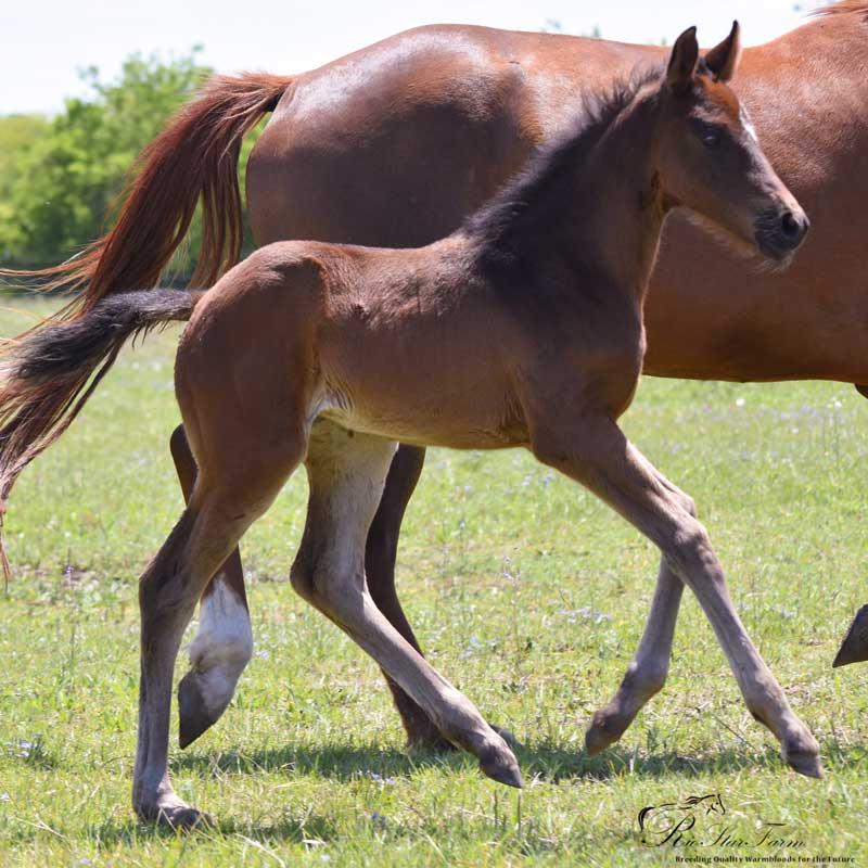 20180423 DSC 0712 Foals