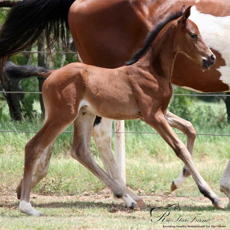 20160625 IMG 0010 Foals