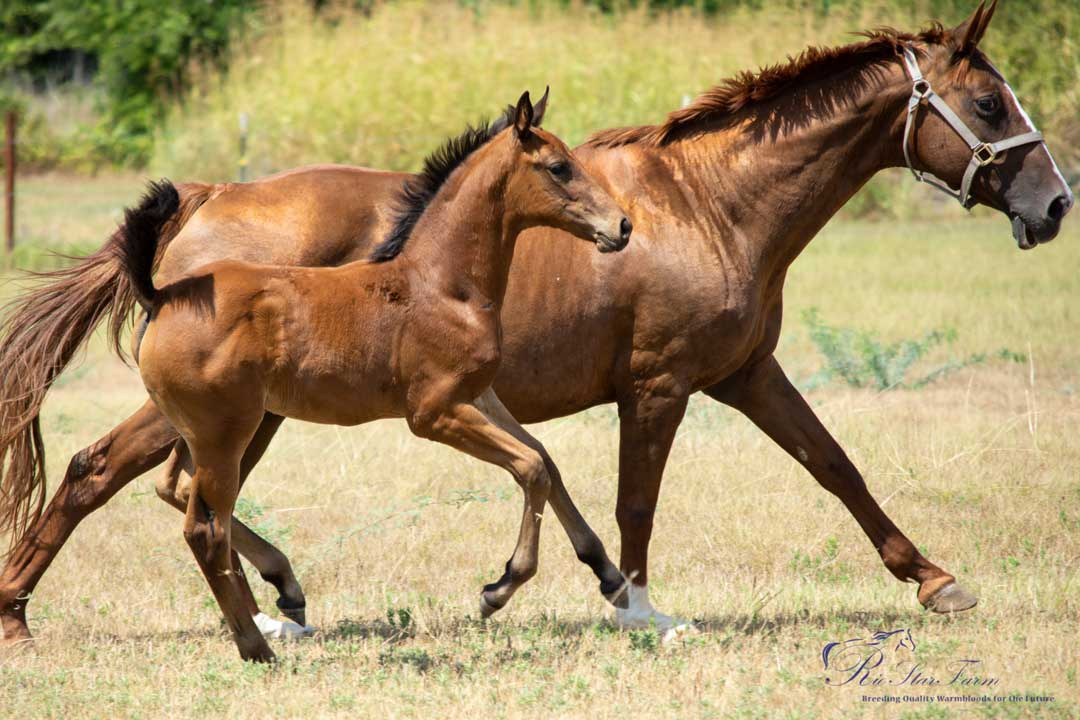 Rose Gold Luck Rio Star Farm News