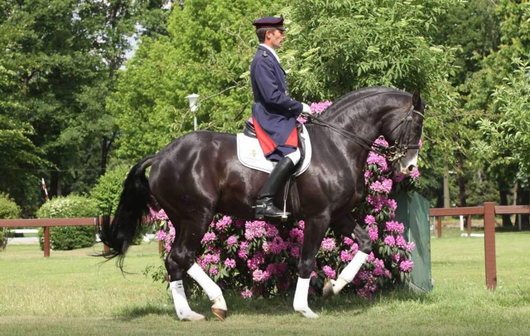 Rascalion Stallion In Utero
