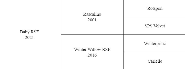 Rascalino Pedigree
