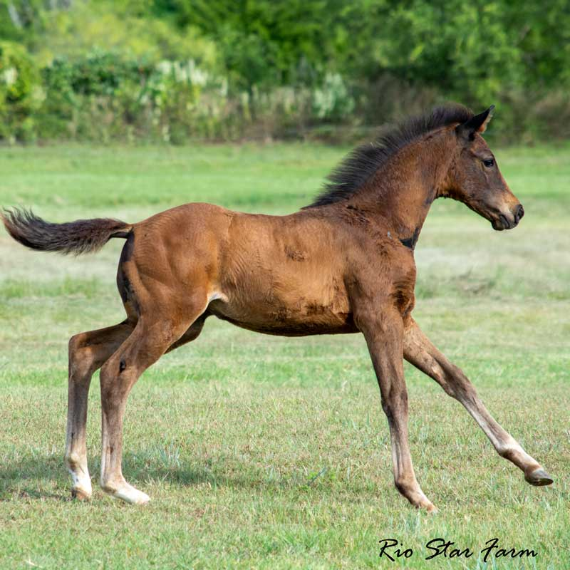 Picture of Julianna RSF (Vitalis x Freestyle)
