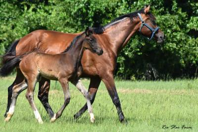 Photo of Calleigh RSF (Qredit x Diamond Stud)