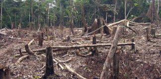Brazil, Deforestation of the Amazon continues to increase,