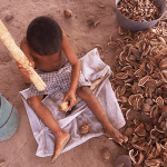 Agriculture is one of the sectors which employs the most children in Brazil,