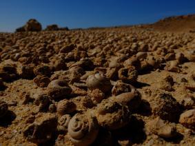 Mare fossile Sahara