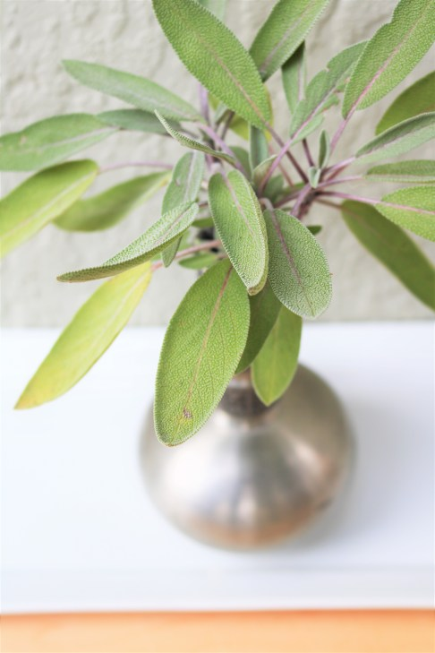 Sage, a common Thanksgiving herb.