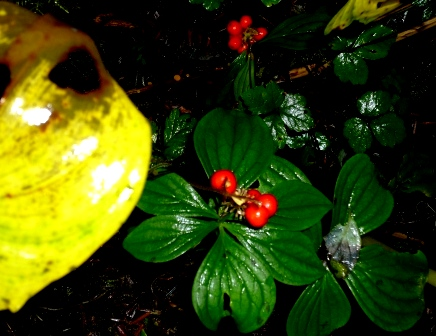 Berries Undergrowth