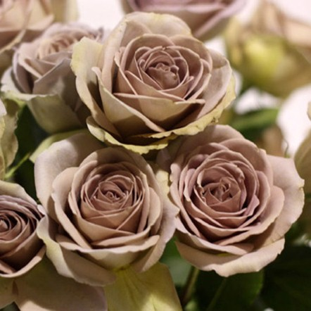 12 Amnesia Roses From LWren Scott Fashion Galleries
