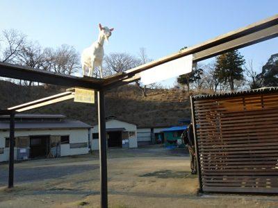 動物園 東京ドイツ村 子供