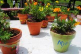 Children planted flowers and decorated flowerpots.