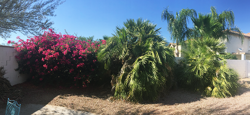 palms-front-view yard work