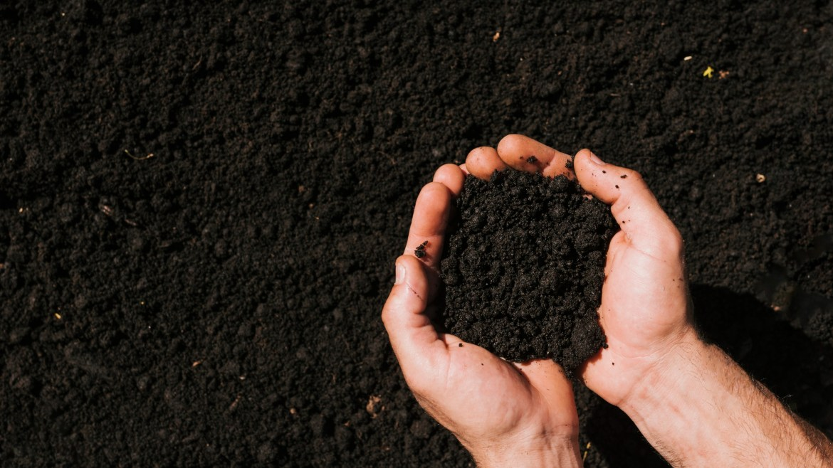 Soil Protection and Building up Organic Matter (Humus)