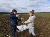 Yapton School helping to plant 200 young saplings in Northwood