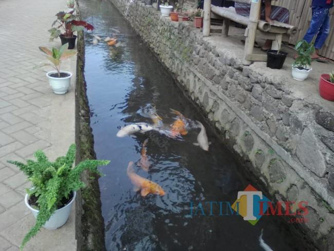 Mandiri, Desa Kluncing Mampu Mengelola Sungai Menjadi Destinasi Wisata