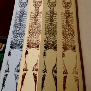 SkeletalAnatomyAlexisRose