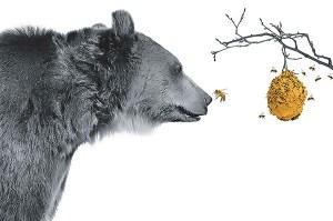 Bear to honey -- Risk Seminar