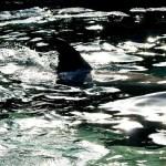 イルカのヒレ