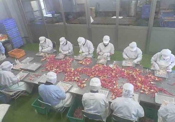 カニ加工工場