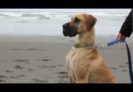 Going Dog-Wild At The Beach
