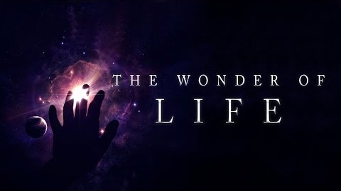 The Wonder of Life
