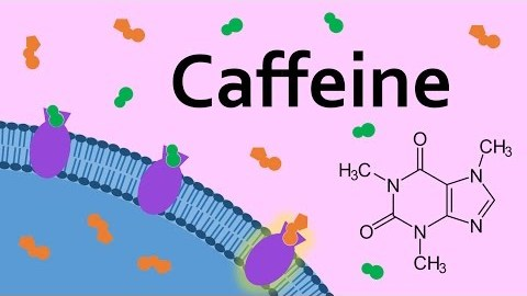 Humans and Caffeine: One Long Historical Marriage