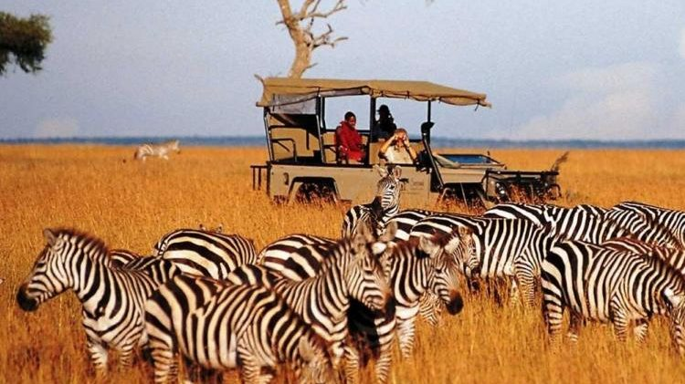Win a luxury safari to Kenya.