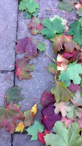 fall-leaves-purple