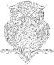 05.Раскраски антистресс совы