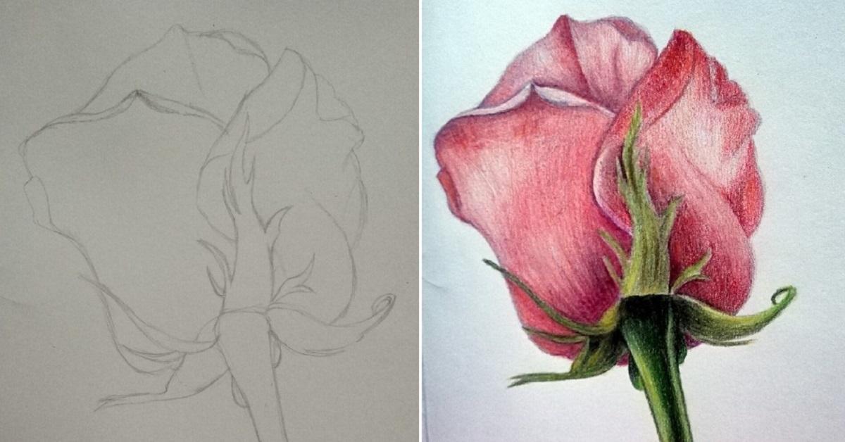 рисунки роз карандашом для срисовки, фото 2