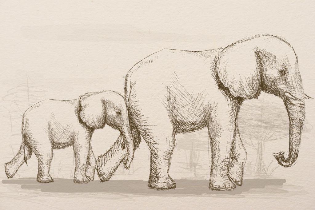 Bir fil kalem resmi