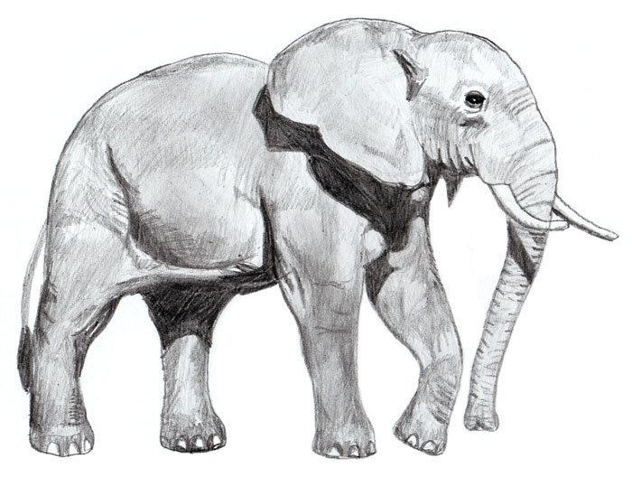 ภาพวาดดินสอช้างพร้อมไอเดียภาพถ่าย 3