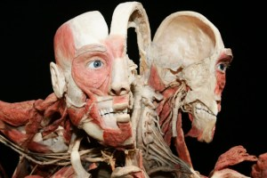 Sep 18, 2009 - Cologne, Germany - Opening of 'Body Worlds' (Koerperwelten) in Cologne. (Credit Image: © Dominique Ecken/Action Press/ZUMA Press)