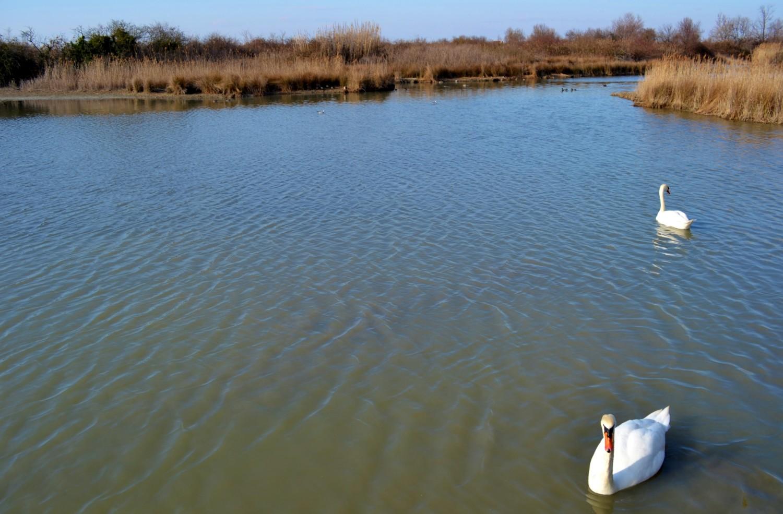 canal-novo-marano-lagunare