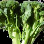 brocoliss1