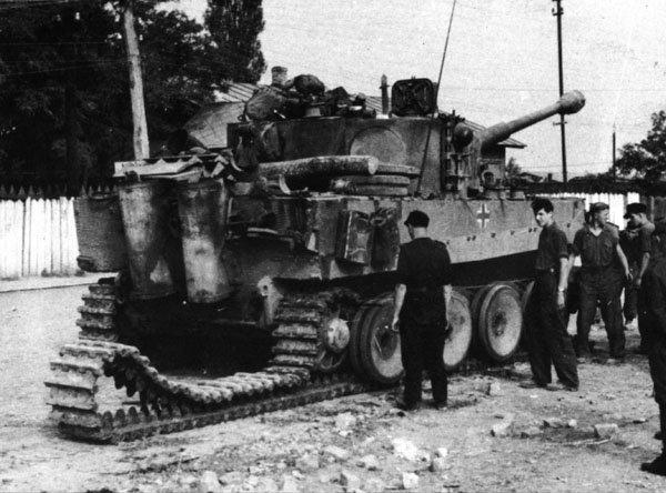 Tiger preparing for rail