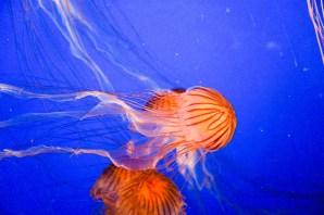 Van_Aquarium-10