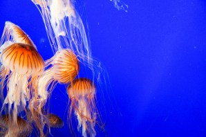 Van_Aquarium-11