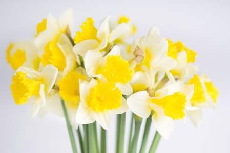 Narcizų žiedai