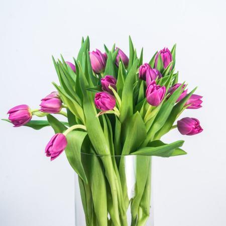 Skintos tulpės vazoje