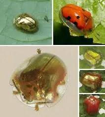 Beetle camouflage