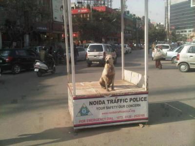 noida-traffic-police