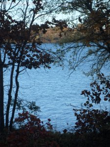 Blue lake gleaming through the thicket